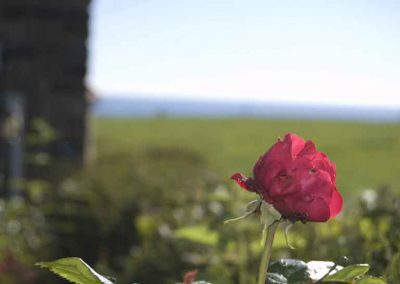 Holly Cottage garden with sea views